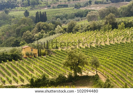Farm in Val d'Orcia (Siena, Tuscany, Italy) at summer, vineyards