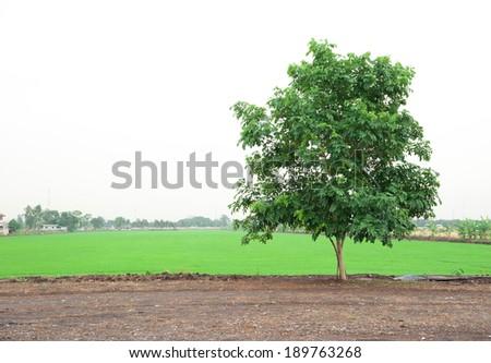 Farm Landscape and Tree - stock photo