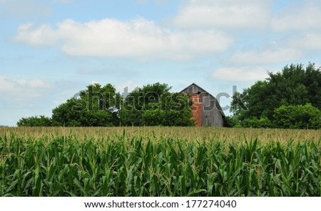 Farm landscape of corn field with barn and silo in background - stock photo