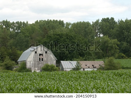 Farm landscape: Old barn and shed with corn field in foreground and trees in background
