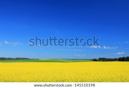 Farm landscape with yellow flowers in rural Idaho, USA.
