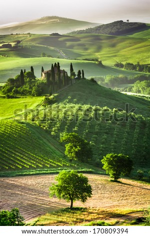 Farm of olive groves and vineyards - stock photo