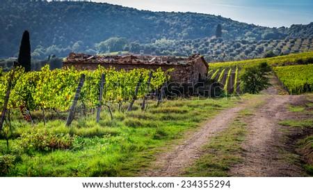 Farm of vineyards in Tuscany - stock photo