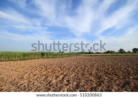 Farm rices in summer