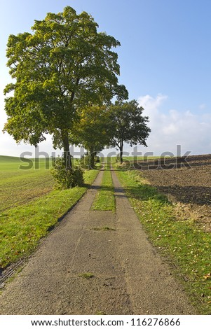 Farm road leading to an old lime tree.