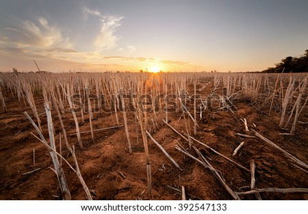 Farm that has been harvested in the Australian outback