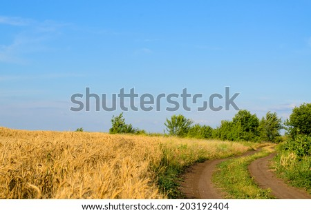Farm track through a golden wheat field leading to green trees on the horizon against a clear sunny blue summer sky