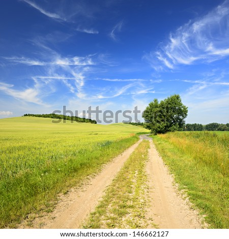 Farm Track trough Green Fields of Barley in Spring Landscape under Blue Sky with Cirrus Clouds