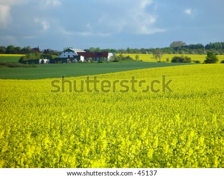 farm with rapeseed field