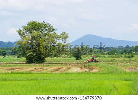 Farm worker preparing the ground for  the growth of rice with tractor, Thailand - stock photo