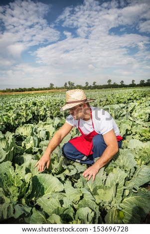 farmer at cabbage field - stock photo