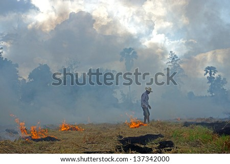 farmer burning straw in rice plantation. For agriculture. - stock photo