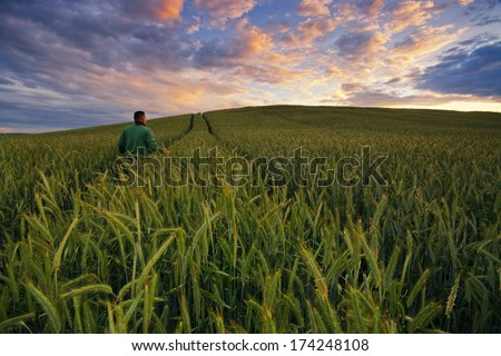 Farmer checking his crops  - stock photo