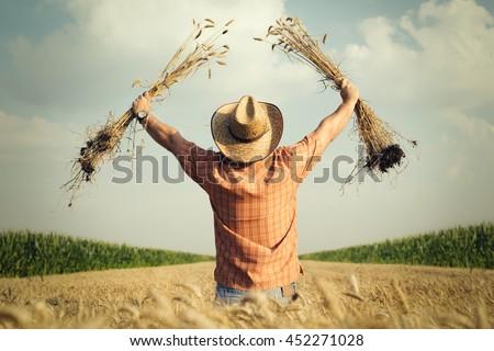 Farmer checks the wheat grain in the field - stock photo