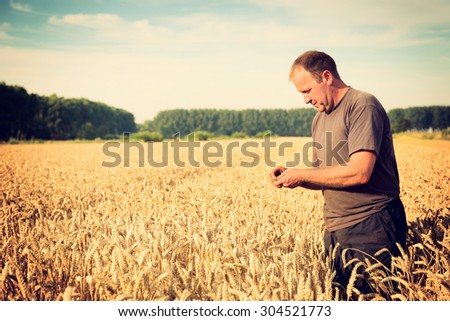 Farmer checks the wheat grain in the field. Toned image, selective focus.