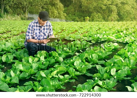 farmer control on cabbage field