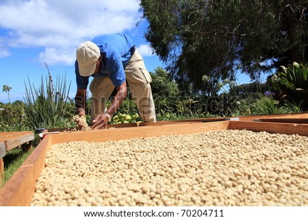 Farmer drying coffee beans in the sun - stock photo