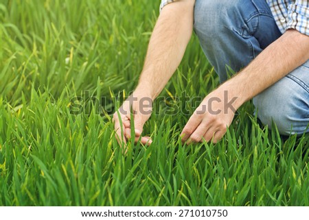 Farmer Examines and Controls Young Wheat Cultivation Field, Crop Protection Concept - stock photo