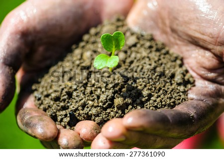 Farmer hand holding a fresh young plant. Symbol of new life and environmental conservation - stock photo