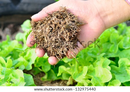 Farmer hand holding compost and organic planting - stock photo