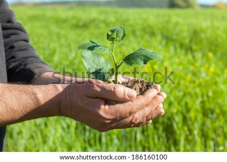 Farmer hands holding a green young plant. Symbol of spring and ecology concept
