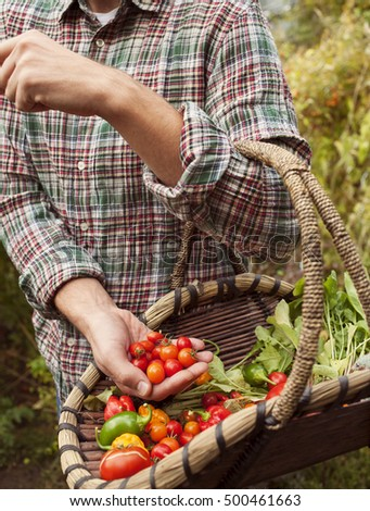 Farmer holding a basket with fresh picked vegetables