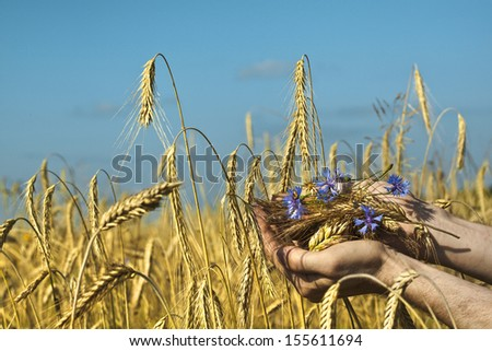Farmer holding a spike of rye against the  blue sky background. Harvest concept  - stock photo