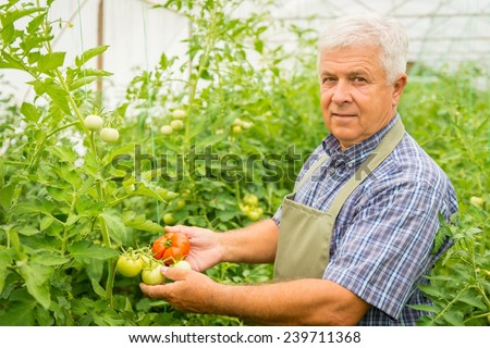 Farmer in a greenhouse - stock photo
