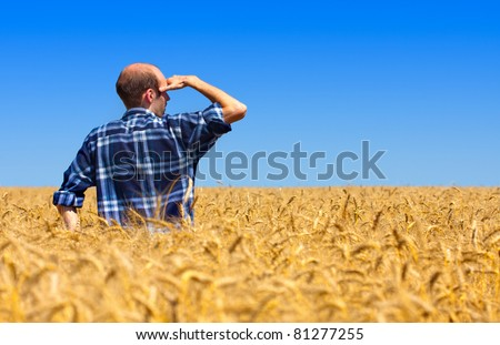 Farmer in field checking his wheat fields - stock photo