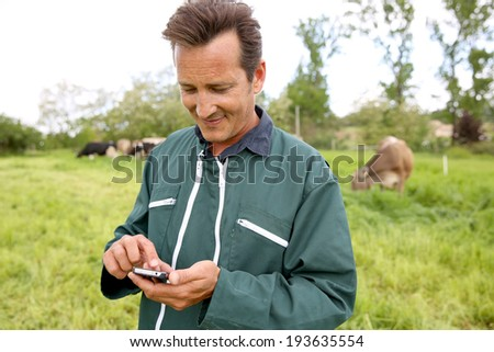 Farmer in field using smartphone, cows in background - stock photo