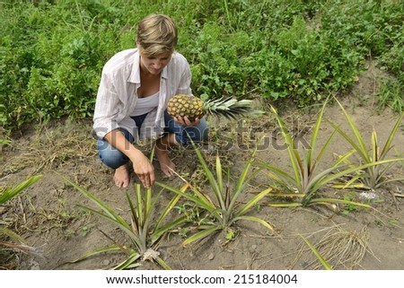 Farmer in pineapple plantation - stock photo