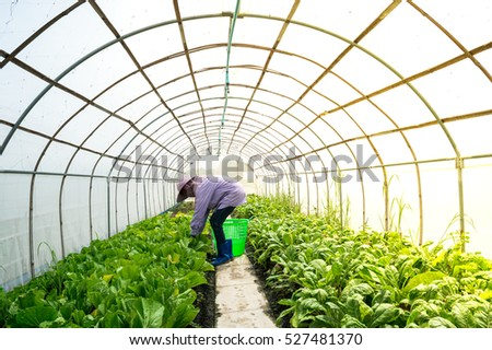 Farmer  inside small perspective  greenhouse