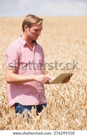 Farmer Inspecting Crops In Field Using Digital Tablet - stock photo