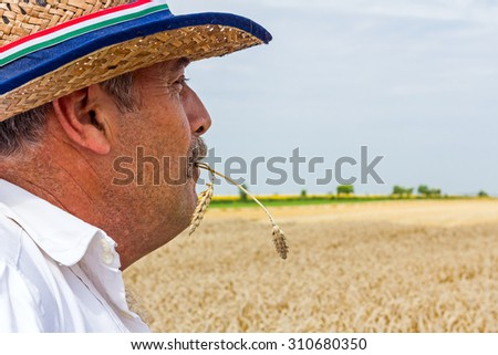 Farmer is looking grain field with a straw of wheat ears in his mouth. - stock photo