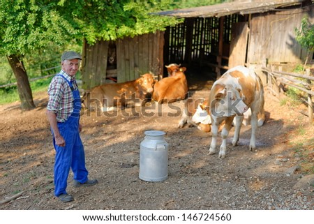 Farmer is working on the organic farm with dairy cows. Model is a real farm worker! - stock photo