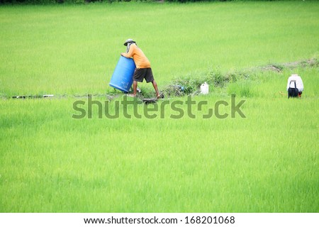 farmer mixing pesticide in paddy field - stock photo