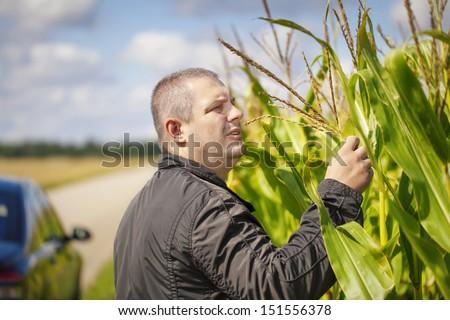 Farmer near the corn field in summer - stock photo
