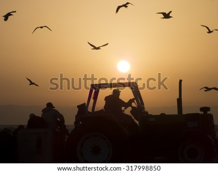Farmer on a tractor in the field, sunset with orange sun and birds flying - stock photo