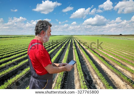 Farmer or agronomist examine carrot plant in field using tablet - stock photo