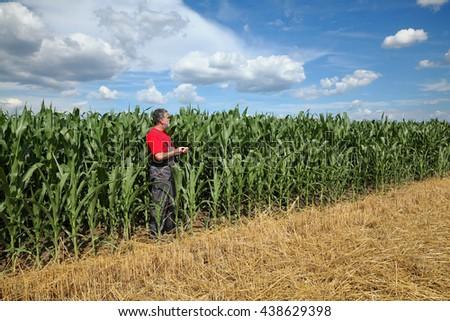 Farmer or agronomist examine corn plant  field using tablet - stock photo