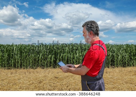 Farmer or agronomist examine corn plant in field using tablet - stock photo