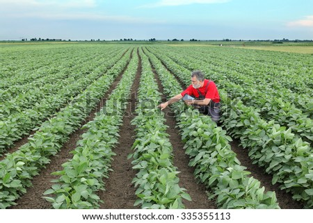 Farmer or agronomist examine soybean plant in field using tablet