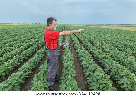 Farmer or agronomist examine soybean plant in field using tablet and pointing - stock photo