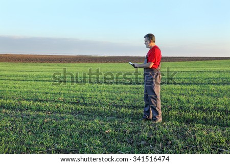 Farmer or agronomist inspect quality of wheat in late autumn, using tablet