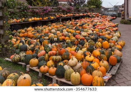 Farmer pumpkin yard sale with tens of orange, yellow and green pumpkins