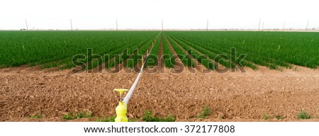 Farmer's Field Green Onions California Agriculture Food Grower - stock photo