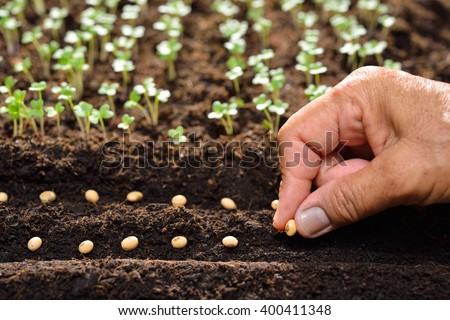 Farmer's hand planting seeds in soil - stock photo