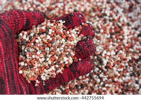 Farmer's hand with fertilizer for apply in farm  - stock photo