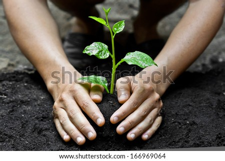 farmer's hands growing a young tree / save the world / heal the world / love nature - stock photo
