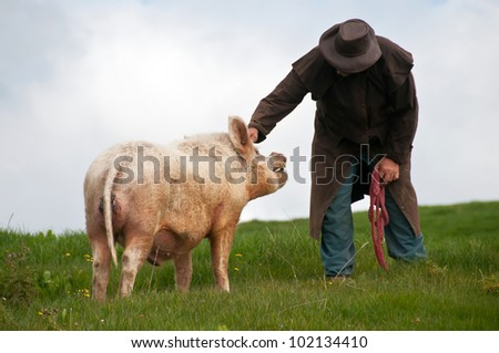 Farmer scratching pigs head - stock photo
